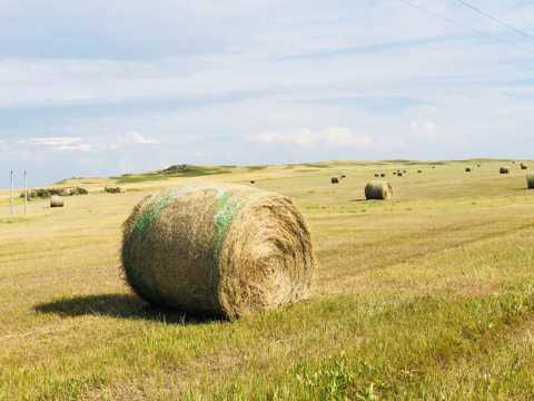 草原干草包图片