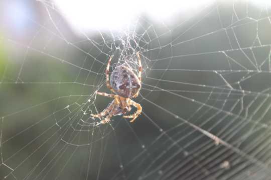 蜘蛛织网图片
