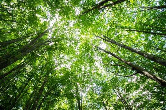 绿色丛林树木俯瞰图片