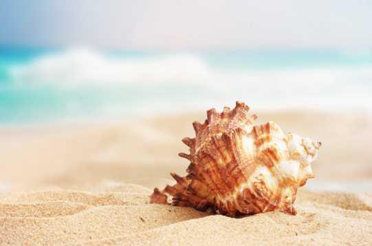沙滩海螺景色图片