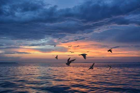 夕阳海鸥图片