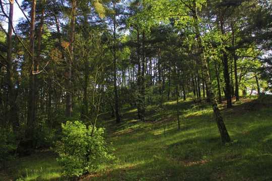安静的丛林风光图片