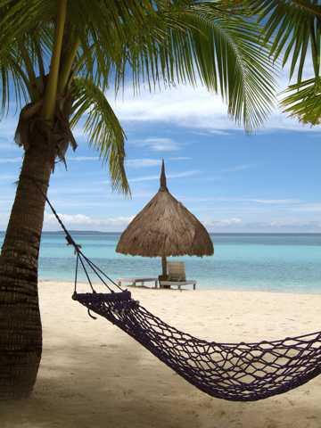 海滩椰子树图片