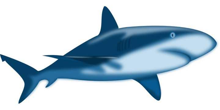可人的鲨鱼图片