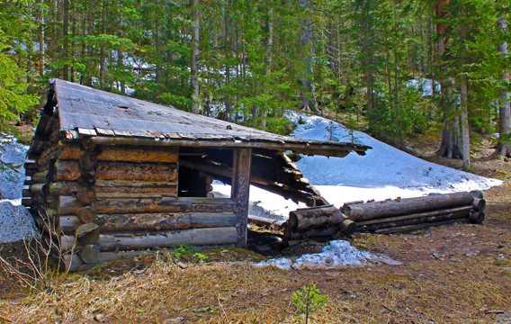 丛林旧木屋图片