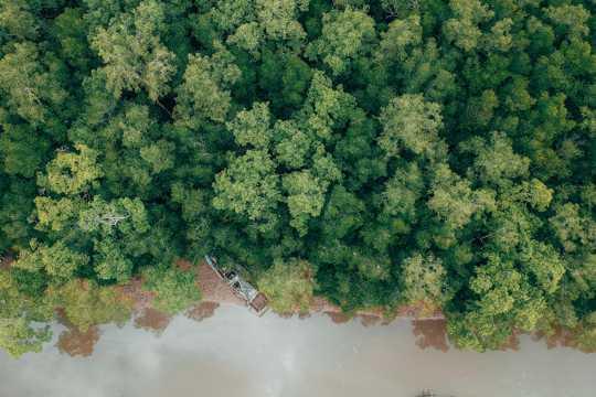 航拍绿油油的丛林图片