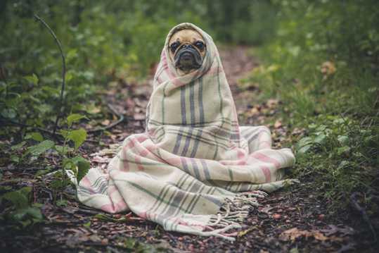 幽默乖巧的小狗图片