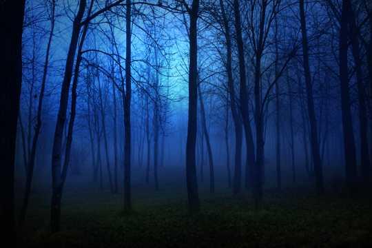 夜晚丛林风光图片