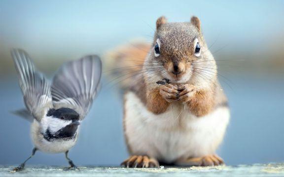 松鼠和小鸟拍照图片