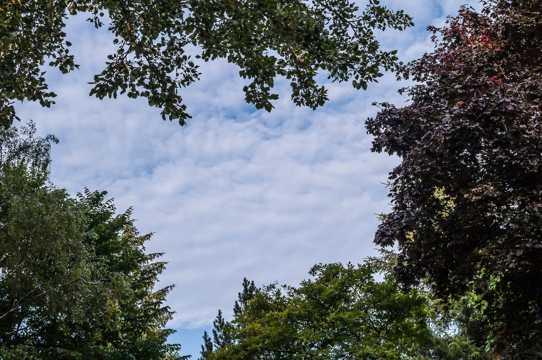 天空下树木图片