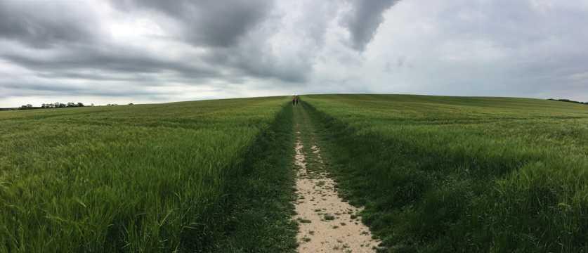 绿色田园景致图片