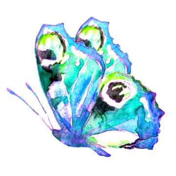 蝴蝶水彩画图片