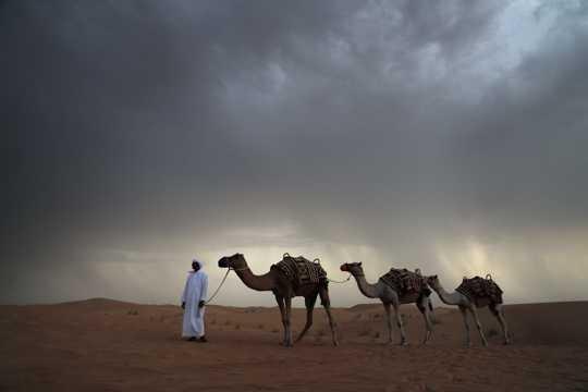 戈壁中徒步的骆驼图片