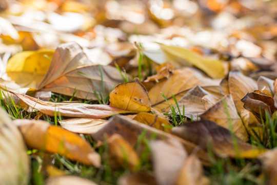 秋日凋零的枯黄枯叶图片