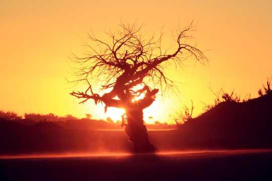 北戴河暮色大树美景图片