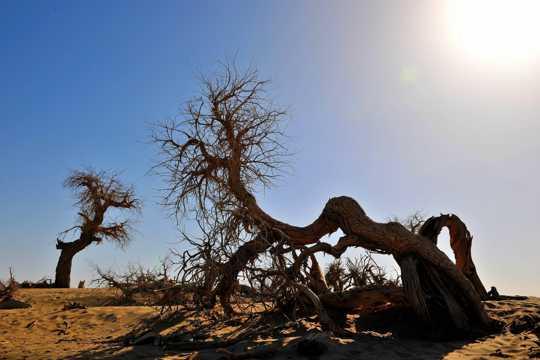内蒙古树木风光图片