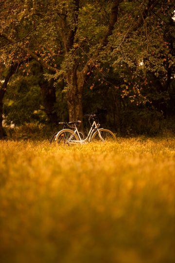 秋日丛林单车风光图片