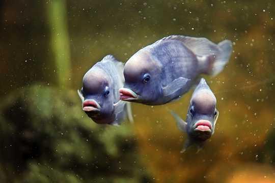 深海小鱼图片