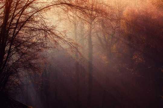 丛林境界图片