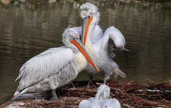 湖畔长嘴鸟图片