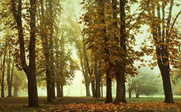 秋天丛林景物图片