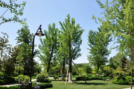 山东新泰清音公园光景图片