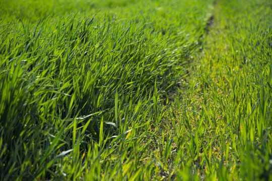 夏天绿色的草坪图片