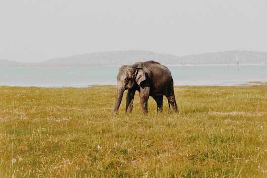 可人的大象图片