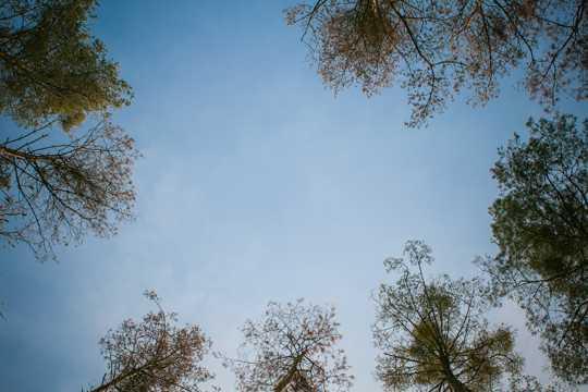 蓝天树木图片