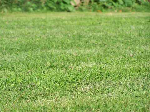 绿色青草坪图片