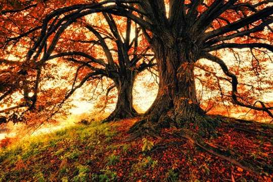 秋日树木景色图片