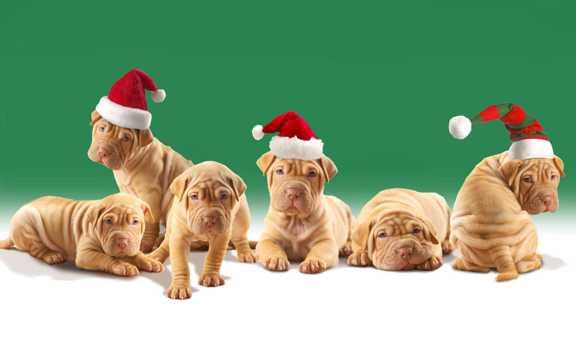 戴着圣诞帽的小狗图片