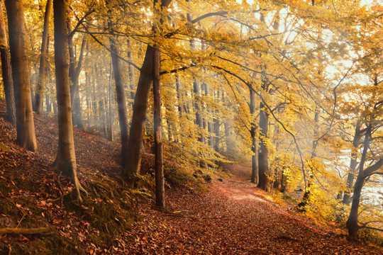秋日金黄丛林树木图片