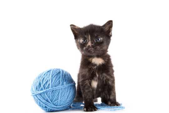 玩毛线团的小猫图片