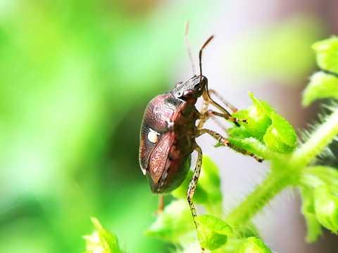 绿叶上甲虫图片