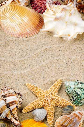 唯美海滩贝壳图片