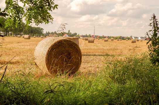 牧场干草垛景观图片