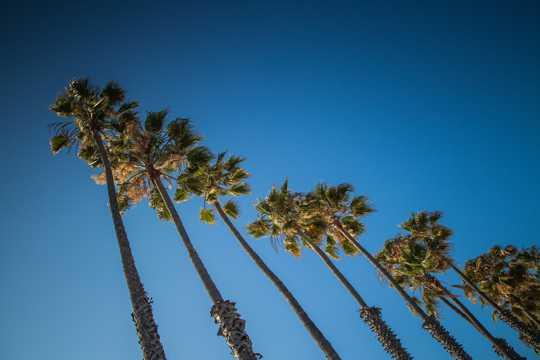棕榈树景象图片