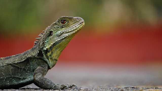 碧绿色蜥蜴图片