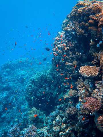 海底珊瑚群鱼图片