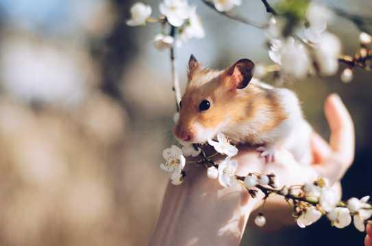 萌宠仓鼠图片