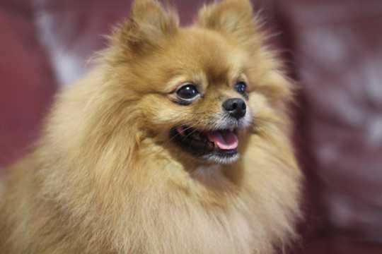 可爱呆萌的小狗狗图片