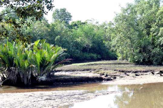 新加坡双溪布洛自然公园自然风光图片