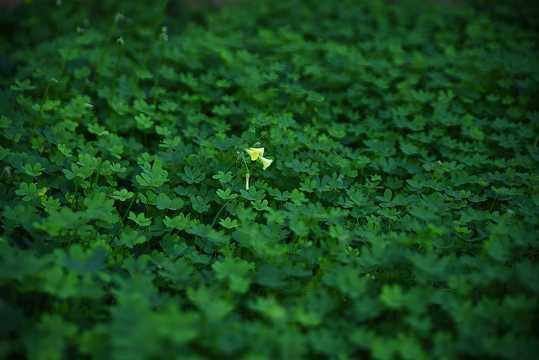 春天绿草景色图片
