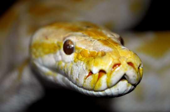 野外毒蛇图片
