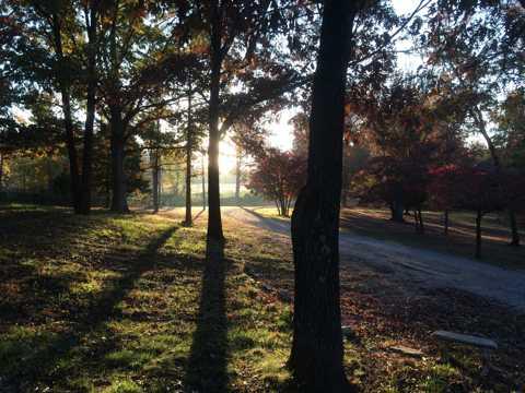 绿色的树林景象图片