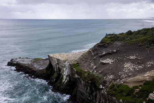 新西兰鸟岛光景图片