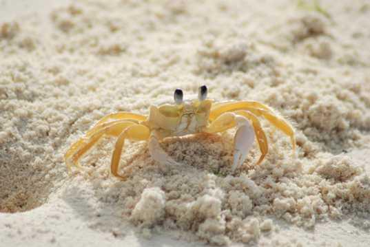 海滨的螃蟹图片