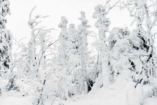 冬天白雪覆盖的自然风光图片